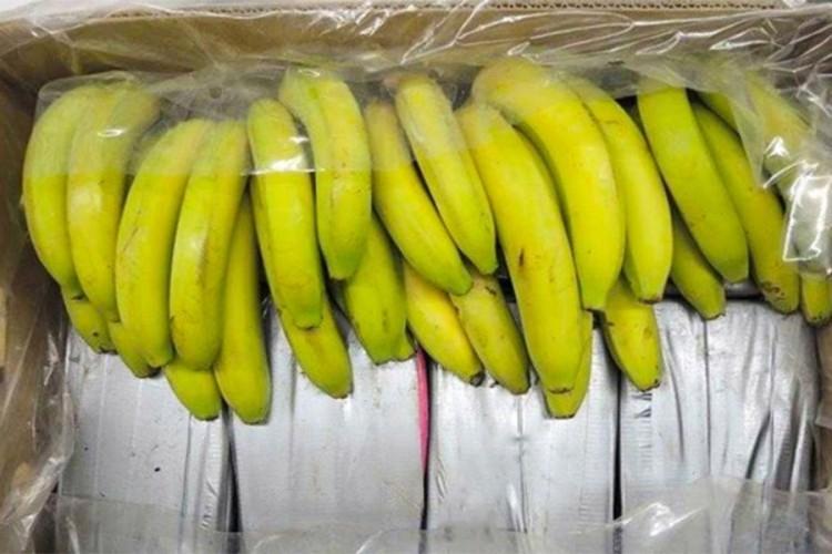 Детали за акцијата во Дубровник: 500 килограми кокаин пронајдени во контејнер со банани