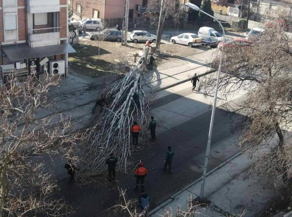 Шилегов прави масакр на дрвата во Ѓорче Петров (ФОТО)
