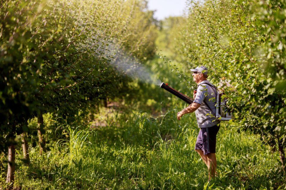 ЕУ забранува овошје третирано со инсектицидот хлорпирифос