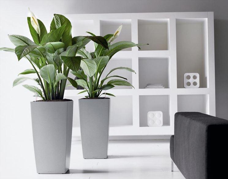 Убави и корисни: Овие цвеќиња ќе привлечат пари во вашиот дом (ФОТО)