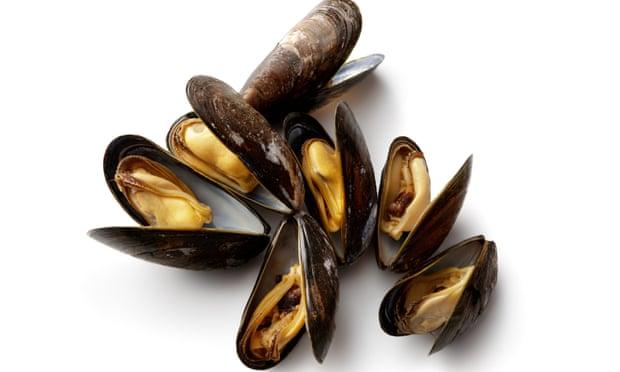 ВИДЕО: Половина милион школки пронајдени мртви на плажа во Нов Зеланд