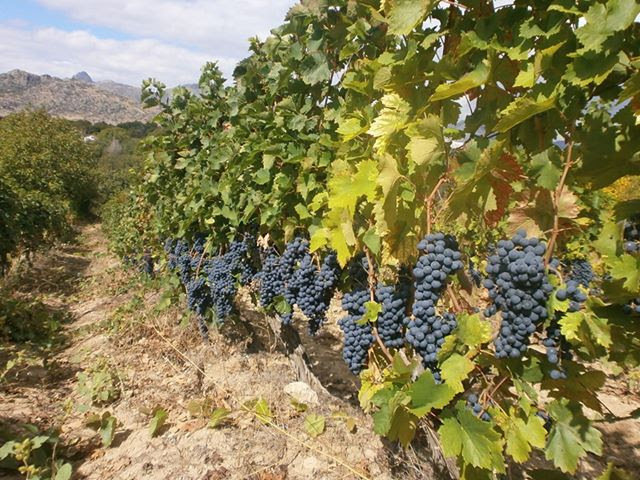Прилепчани прават домашно вино за душа и за свој мерак преку домашни, тајни рецепти