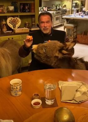 Холивудскиот актер Шварценегер со апел до граѓаните да останат дома:  Слушајте ги експертите не мороните (ВИДЕО)