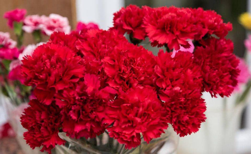Погрешно го славиме 8-ми март: Денот е борба за правата на жените, а не за цвеќе и бонбониери
