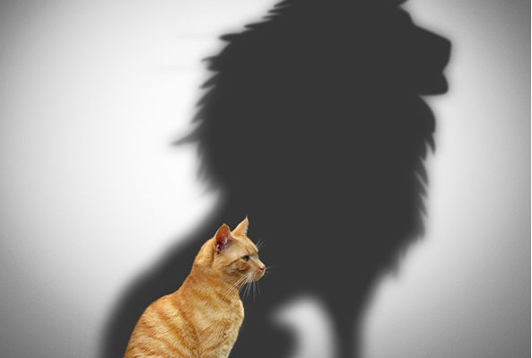 """Моќни цитати: """"Кој не ризикува, нема да добие"""", """"Мојот страв е тој кој ми дава највеќе храброст""""…"""