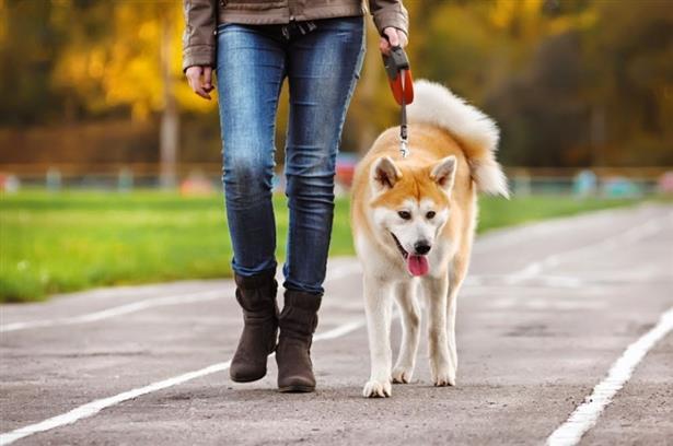 Сопствениците на миленици бараат измени на забраната за движење поради физиолошките потреби