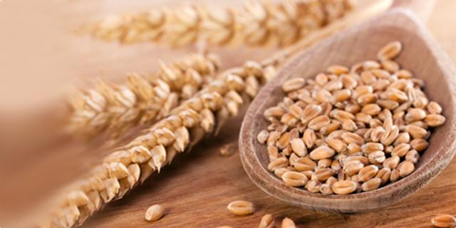Неизвесен откупот на пченицата