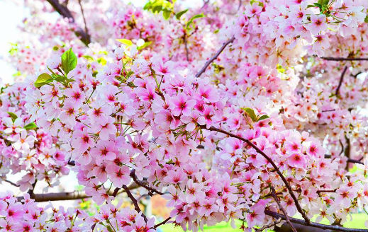Дожд и сонце подеднакво- временска за месец април, особено подгответе се за тоа што ни доаѓа по Велигден (ФОТО)