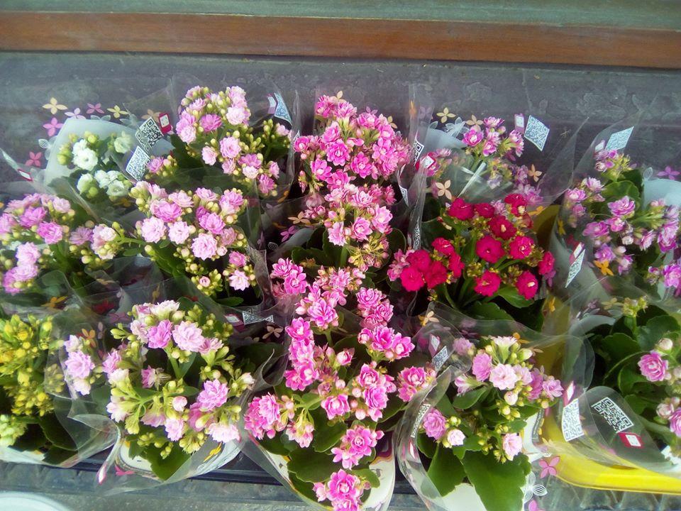 Во Италија дозволена продажба на цвеќиња, растенија и семе