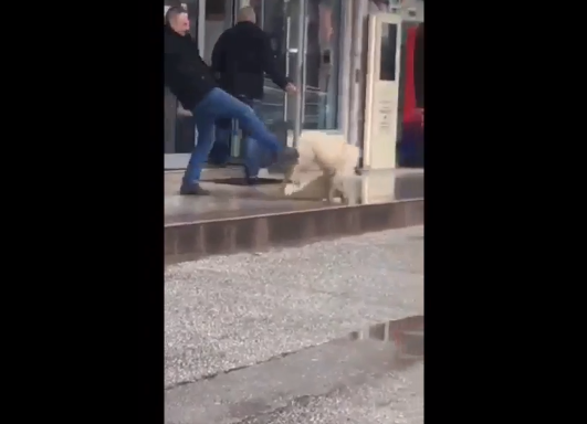 Советник од Македонски брод насилно шутира куче! (ВИДЕО)