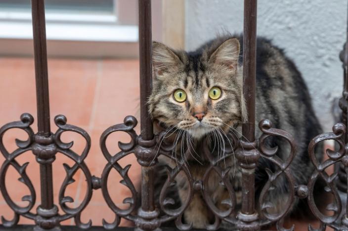 Две мачки, првите заразени домашни миленици во САД со коронавирус