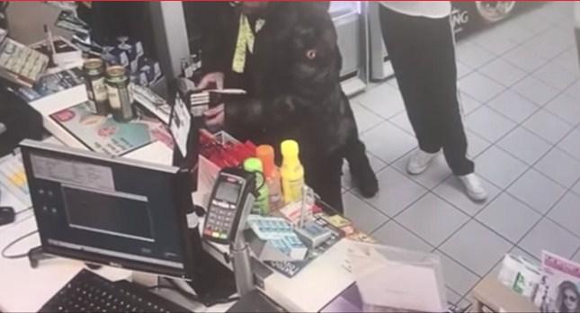 Безбедносните камери го уловија додека краде: Уапсен познатиот фолкер! (ВИДЕО)