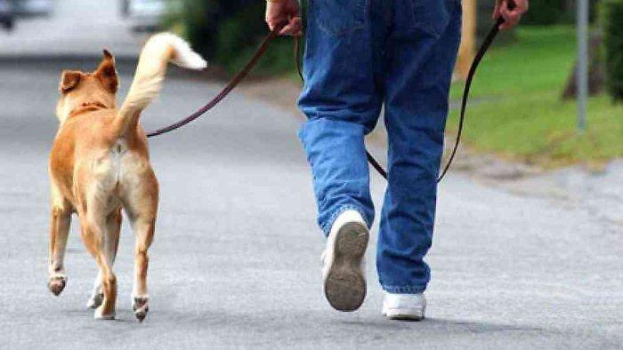Полицијата апси момче со куче во Кисела Вода (ВИДЕО)