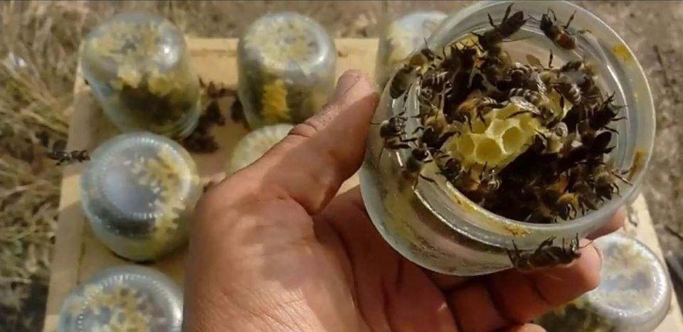 Македонец кој буквално живее во Медена земја: Погледнете како чува пчели во стаклени тегли (ВИДЕО)