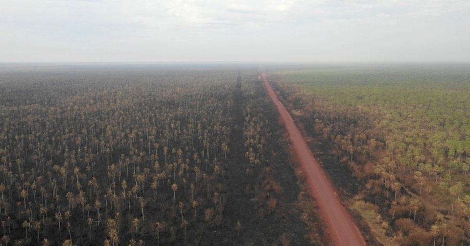 За една година во Амазон уништени се шуми со големина на Либан
