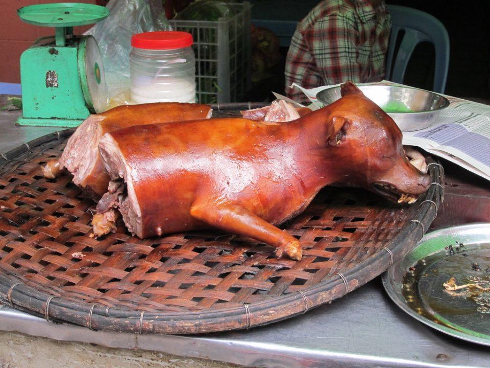 Коронота коси во светот, а кинезите повторно колат кучиња и ги јадат !