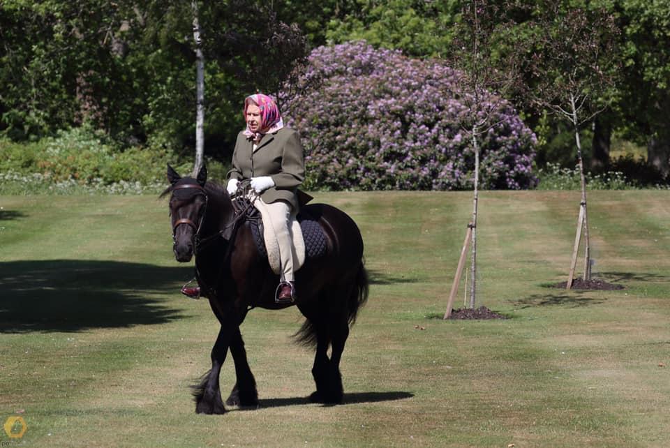 ФОТО: Кралицата повторно сликана на пони во паркот во Виндзор