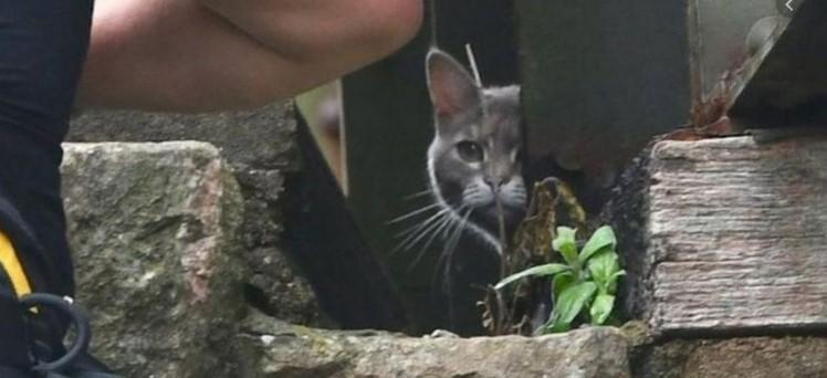Маче во Јапонија спаси човек паднат во канал