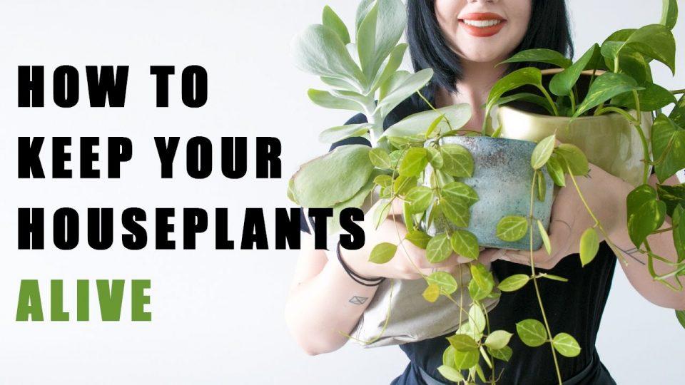 15 грешки поради кои ви умираат растенијата во домот