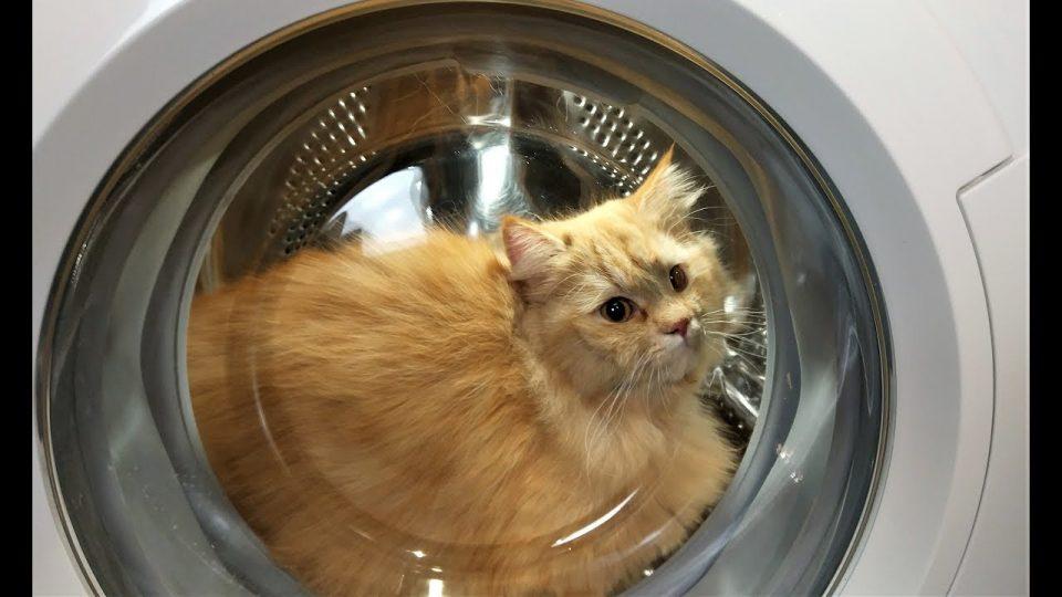 Мачка заспала во машина за перење, сопствениците велат дека не ја виделе