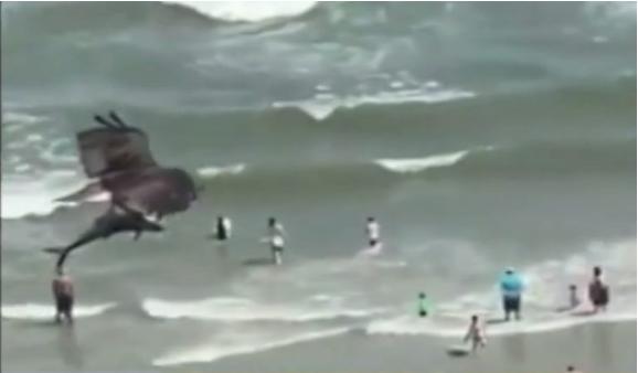 НЕВЕРОЈАТНО: Орел улови ајкула! (ВИДЕО)