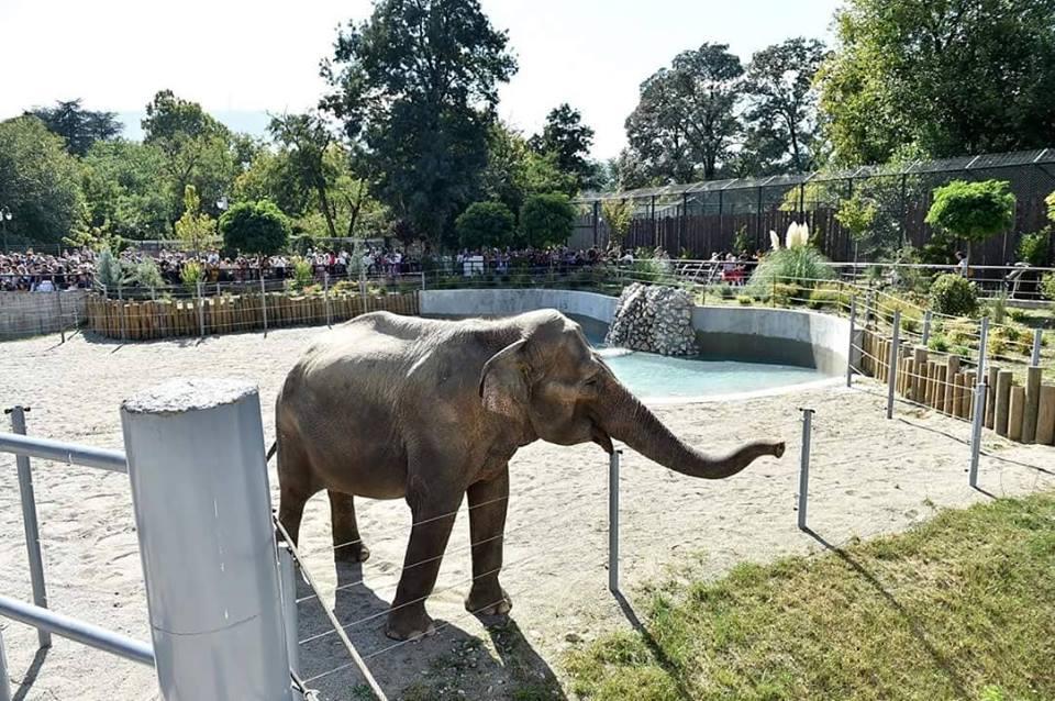 Евакуирана скопската зоолошка – слон турнал столб за електрична енергија