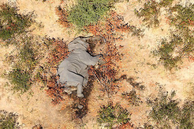Боцвана повторно се соочува со масовна смрт на слонови