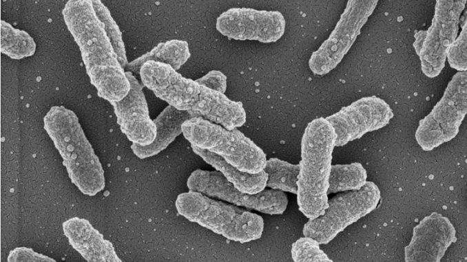 Русија соработува со соседите за превенција од бубонска чума