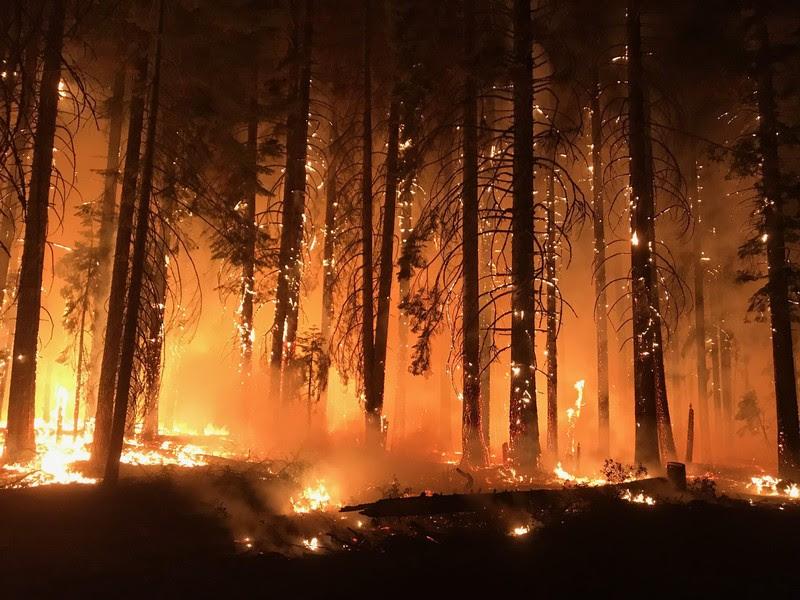 Евакуирани 60.000 луѓе поради шумски пожар во Калифорнија