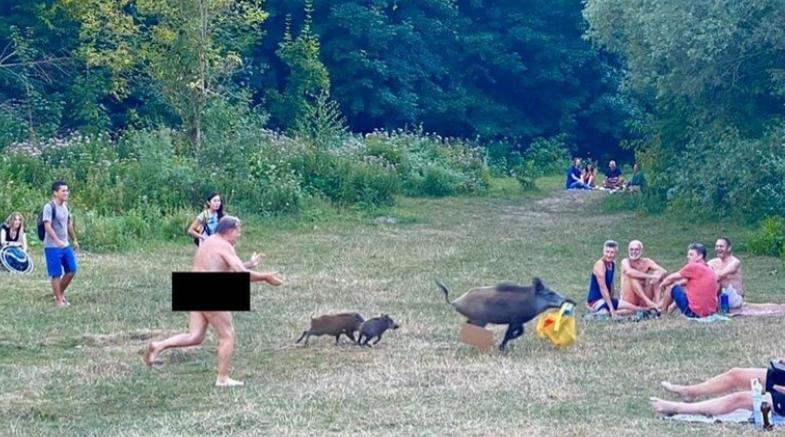 Гол маж брка дива свиња , што му го украла лаптопот (ФОТО)