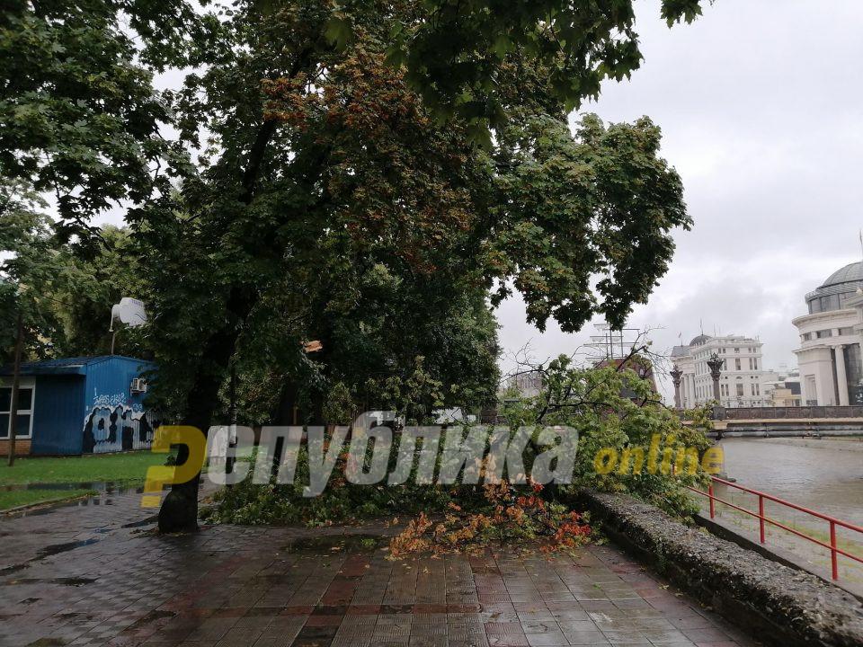 Силниот ветер откорна дрвја на кејот на Вардар (ФОТО)