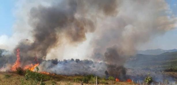 Пожар кај Тиквешко Езеро, зафатена е и шума