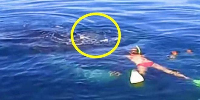Семејствот ослободило заробен кит, но не очекувале да им се заблагодари на тој начин! (ВИДЕО)