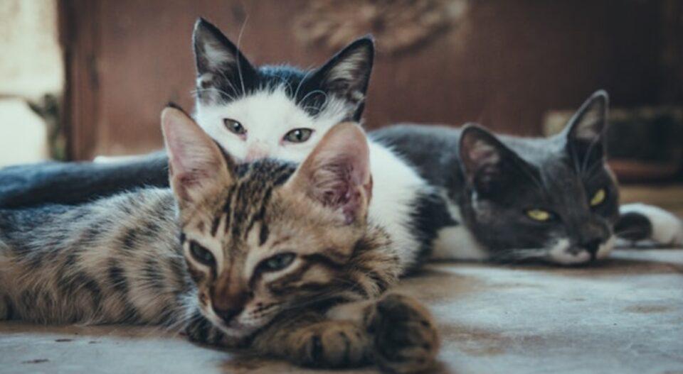 Што значи да сонуваш мачка? Запомнете добро како се однесувa, oд тоа зависи што ве чека во иднина