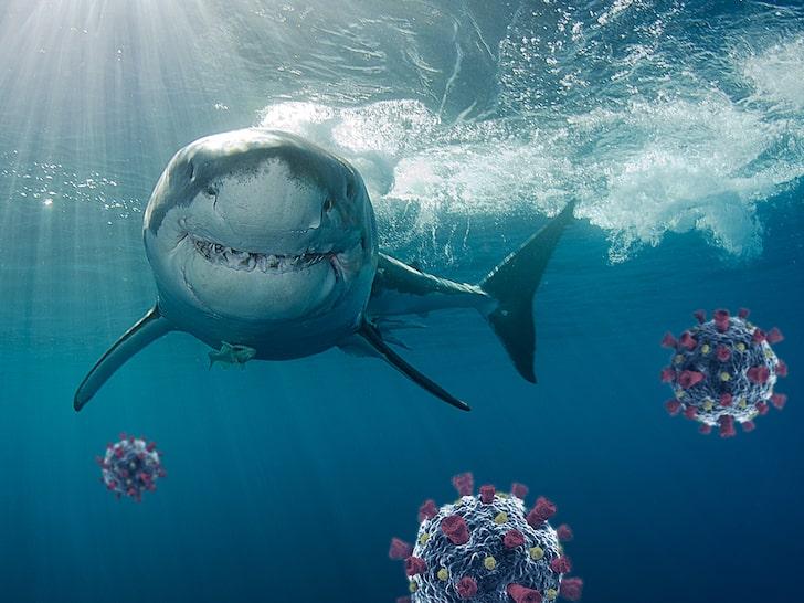 Ајкулите во светот загрозени поради вакцината против Ковид-19