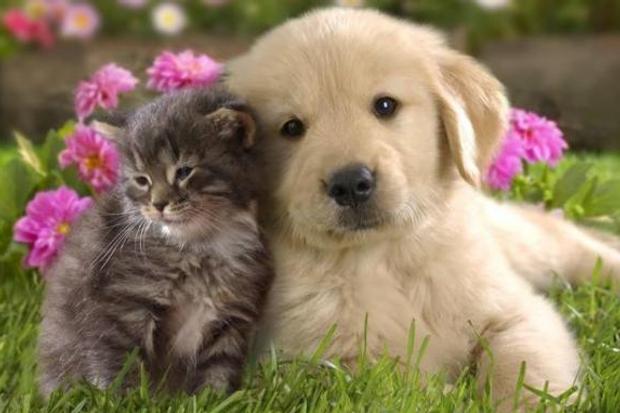 Вакцинирајте ги милениците, тие не се забава, туку обврска и одговорност