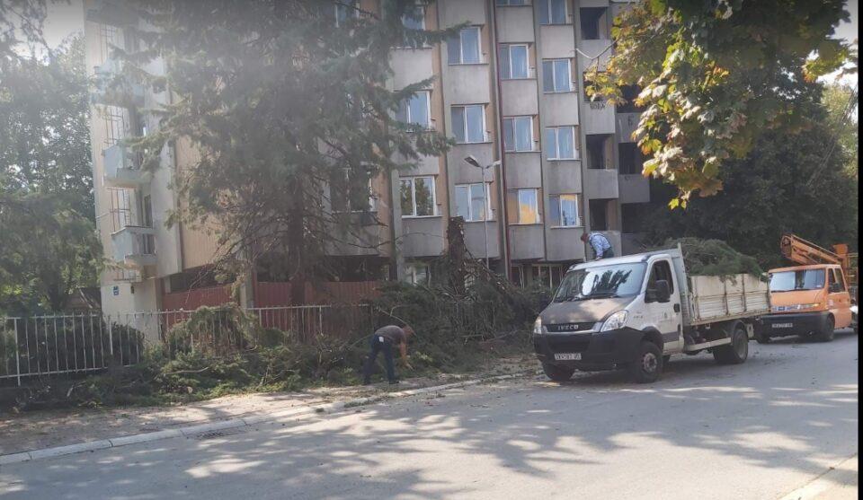 Зеленило нема да остават: Се сечат дрвја меѓу Центар и Карпош (ФОТО)