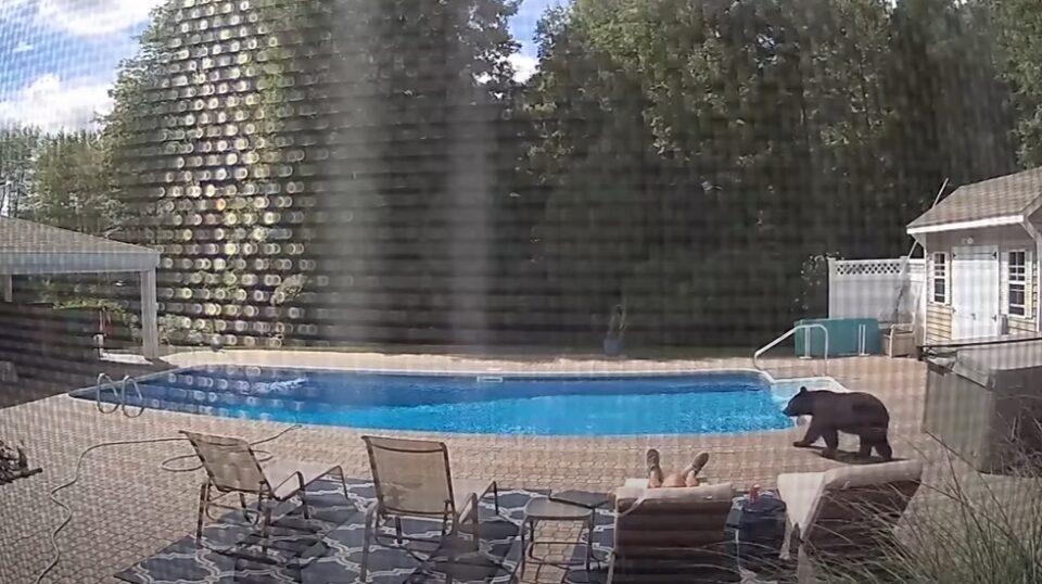 Заспал покрај базен, го разбудила МЕЧКА! (ВИДЕО)