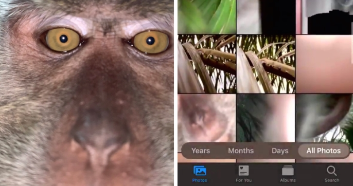 "ФОТО: Мајмун украл телефон и си правел ""селфи"""
