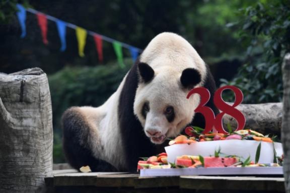Долговечна машка панда од зоолошка градина во Јапонија наполни 38 години