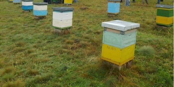 Ектремно ниските температури нанесоа големи штети во пчеларството