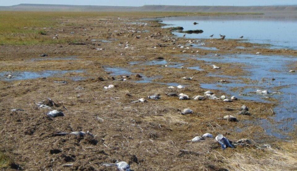 Милиони мртви птици преселници во САД и Мексико