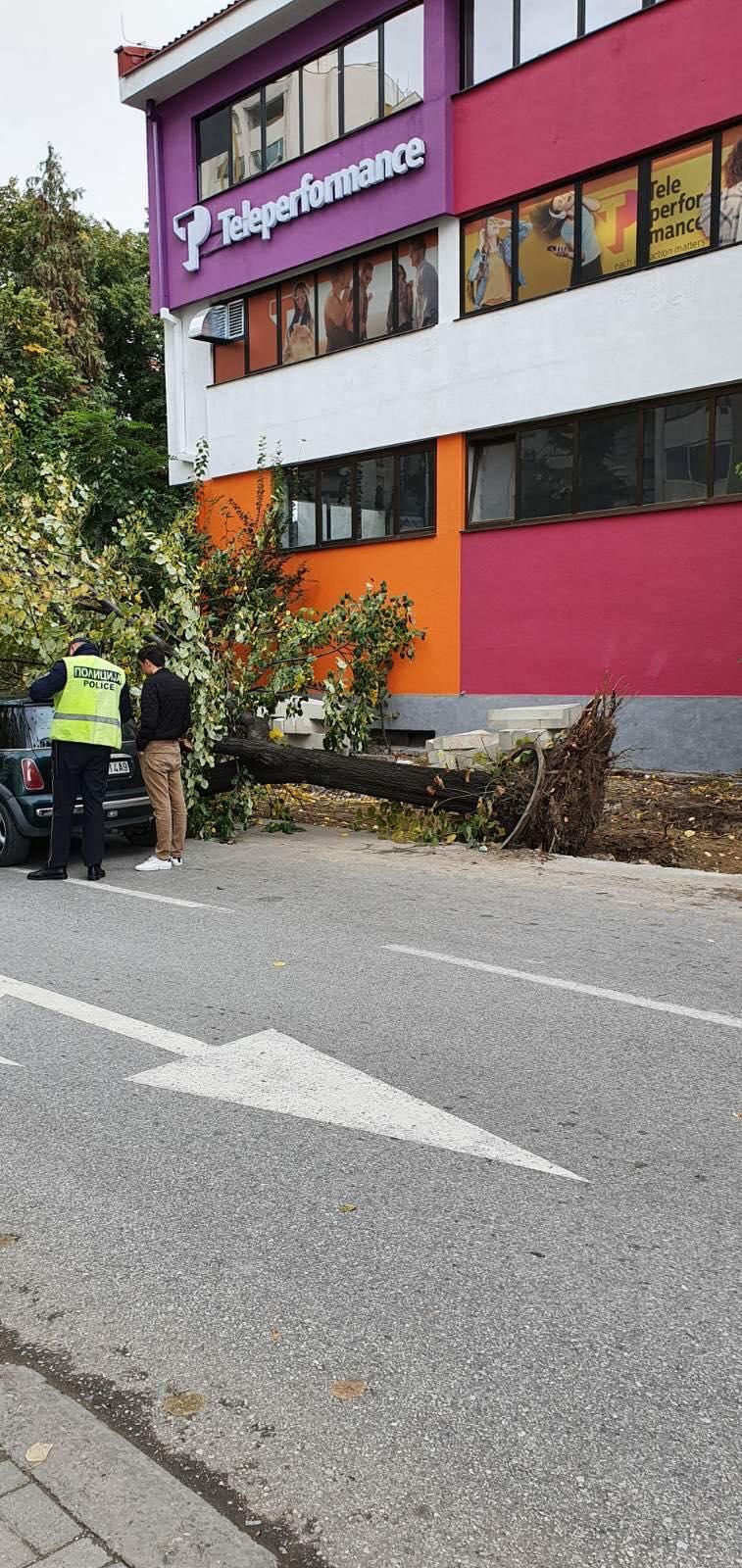Додека се најавуваа помпезно реконструкции на улици во Скопје на истите се случува хаос- падна дрво врз автомобил во Капиштец (ФОТО)