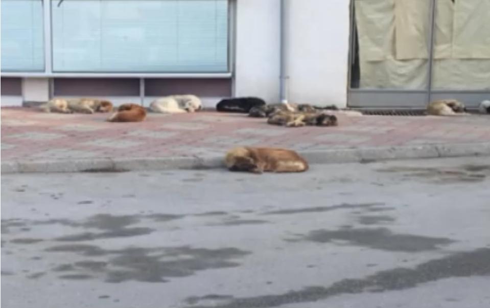 Насилството врз животните во Грција станува кривично дело