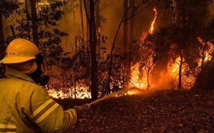 Пожарите во Австралија уништија половина од островот Фрејзер