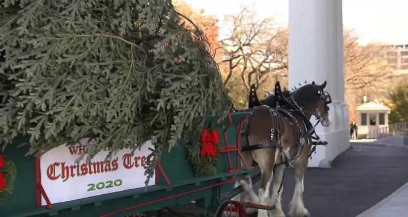 ВИДЕО: Во Белата куќа пристигна божиќната елка