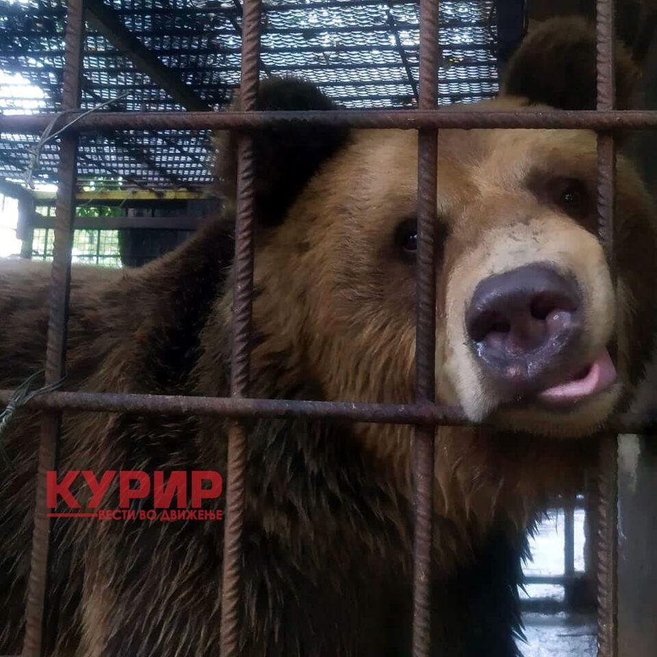 ФОТО: Мечето Теди од штипската зоолошка се сели во Бугарија