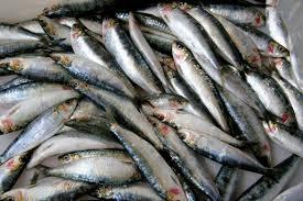 Запленетата белвица од рибокрадците завршува на маса кај охридските затвореници
