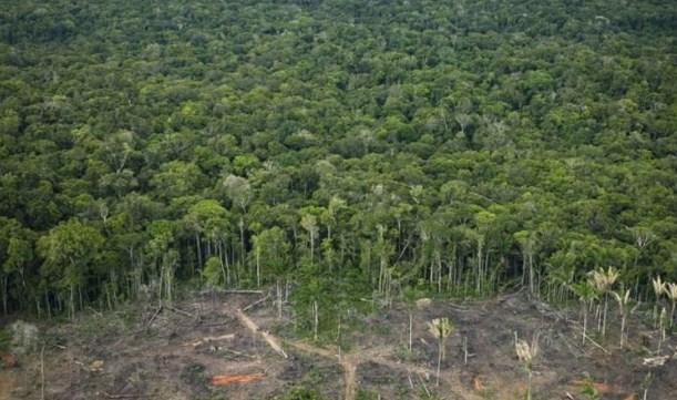 Амазонската прашума за 18 години изгуби површина колку Шпанија
