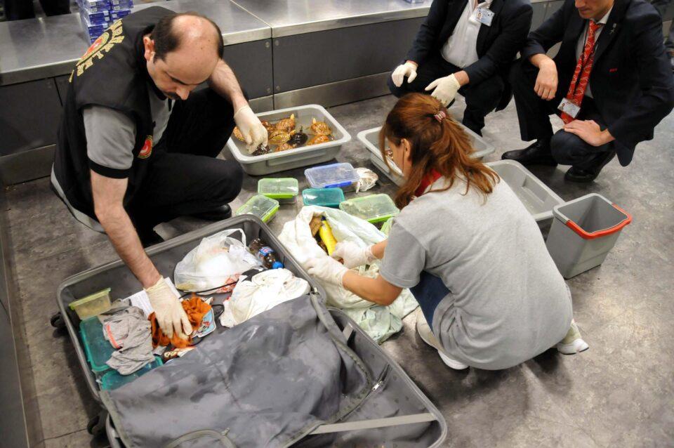 Ова им се случило за прв пат во историјата на аеродромот- кога полицијата ги отворила куферите имала што да види- 80 змии, но не секакви!